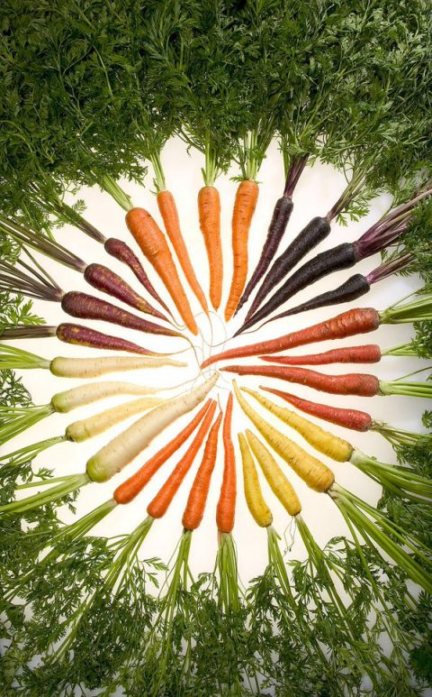 Carrot Sequencing and DRAGO2, history of a powerful cooperation