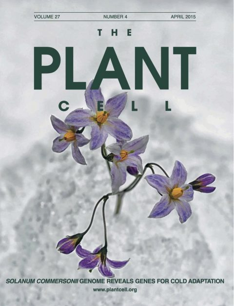 The <em>Solanum commersonii</em> Genome Sequence Provides Insights into Adaptation to Stress Conditions and Genome Evolution of Wild Potato Relatives