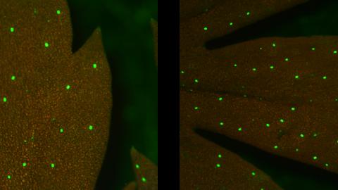 Molecular Farming in Artemisia annua, a Promising Approach to Improve Anti-malarial Drug Production
