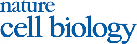 Epigenetic remodelling licences adult cholangiocytes for organoid formation and liver regeneration