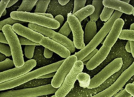 Biotechnology fermentation