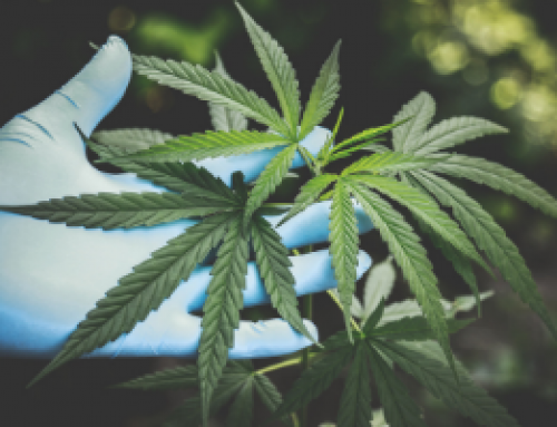 The potential of cannabidiol in the COVID‐19 pandemic