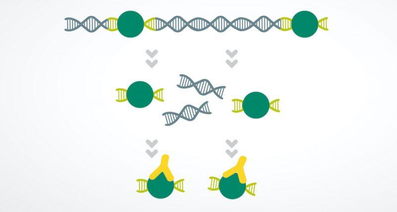 Epigenomics icon
